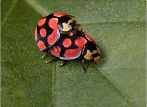 """<img src=""""https://goigu.com/foto.jpg"""" alt=""""¿Cómo atraen los insectos a su pareja?""""/>"""