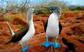 """<img src=""""https://goigu.com/foto.jpg"""" alt=""""¿Qué hay de especial en las Islas Galápagos?""""/>"""