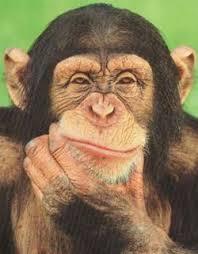 """<img src=""""https://goigu.com/foto.jpg"""" alt=""""¿Son los humanos realmente descendientes de los monos?""""/>"""