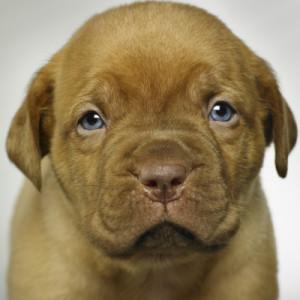 """<img src=""""https://goigu.com/foto.jpg"""" alt=""""¿Cómo perciben el tiempo los perros?""""/>"""